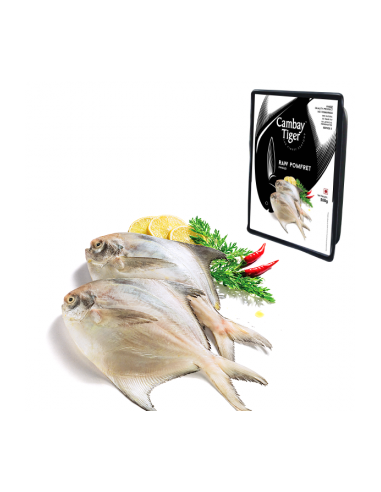 Cambay Tiger Pomfret Whole Small 500gm